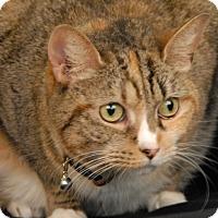 Adopt A Pet :: Tripper - Newland, NC
