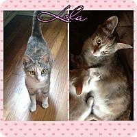 Adopt A Pet :: Lola - bridgeport, CT