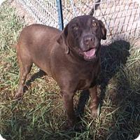 Adopt A Pet :: Mocha - Bonifay, FL