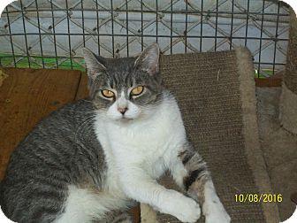 Domestic Mediumhair Cat for adoption in Mexia, Texas - Charity