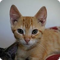 Adopt A Pet :: Timmy - Manitowoc, WI