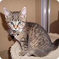 Adopt A Pet :: Ib litter - Fiji - Livonia, MI