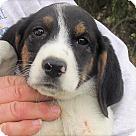 Adopt A Pet :: Buford