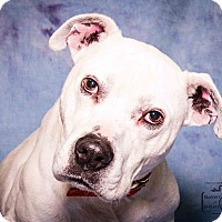 Adopt A Pet :: Bruster - Divide, CO
