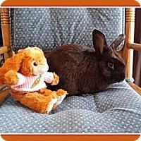 Adopt A Pet :: Carlton - Williston, FL