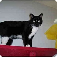 Adopt A Pet :: Skipper - Hamburg, NY