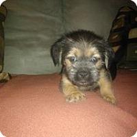 Adopt A Pet :: Lydia - Marlton, NJ