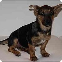 Adopt A Pet :: Maya - Pending - Vancouver, BC