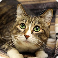 Adopt A Pet :: Ralphy - Gilbert, AZ
