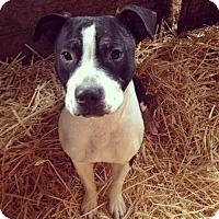 Adopt A Pet :: Flash - Lodi, CA