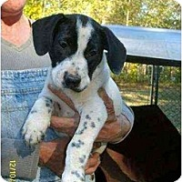 Adopt A Pet :: Truman - Lincolndale, NY