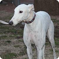 Adopt A Pet :: Joey Tschykovsky