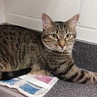Adopt A Pet :: Abigail - Barnwell, SC