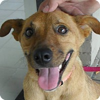 Adopt A Pet :: Coco - Hopkinsville, KY