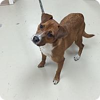 Adopt A Pet :: CoCo - Decatur, AL