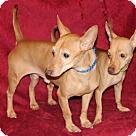 Adopt A Pet :: Bonnie