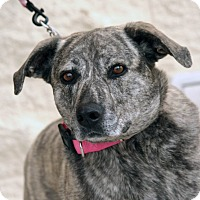 Adopt A Pet :: Gerdy - Palmdale, CA