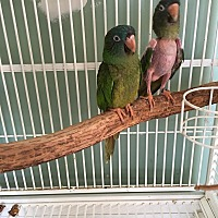 Adopt A Pet :: Molly & Paulie - bonded - Blairstown, NJ