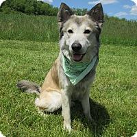 Adopt A Pet :: SABER - New Cumberland, WV