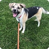 Adopt A Pet :: Nova - Omaha, NE