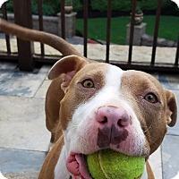 Adopt A Pet :: Bessie - Alpharetta, GA