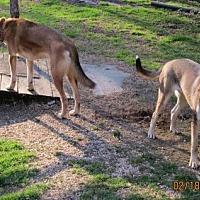 Hound (Unknown Type)/Husky Mix Dog for adoption in Portland, Maine - PAYTON