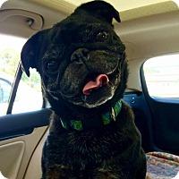 Adopt A Pet :: George - Grand Rapids, MI