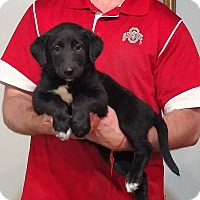 Adopt A Pet :: Millie - Gahanna, OH