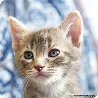 Adopt A Pet :: Ruger - Marietta, GA