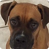 Adopt A Pet :: Lipstick - Austin, TX