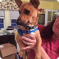 Adopt A Pet :: Rudy - Raleigh, NC