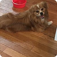 Adopt A Pet :: Charlie - Hayes, VA