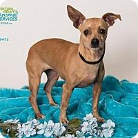 Adopt A Pet :: *DOROTHY - Camarillo, CA