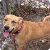 Adopt A Pet :: SIMBA - Reed City, MI