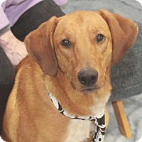 Adopt A Pet :: Gus-PENDING - Garfield Heights, OH