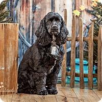 Adopt A Pet :: Tede 3yr Adopted - Mentor, OH