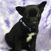 Adopt A Pet :: EBAN - Westminster, CO