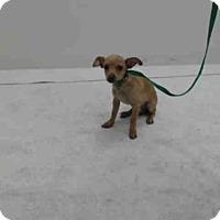 Adopt A Pet :: SNOOPY - Orlando, FL