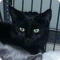 Adopt A Pet :: Wednesday - East Brunswick, NJ