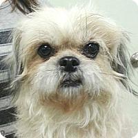 Adopt A Pet :: Susie - Orlando, FL