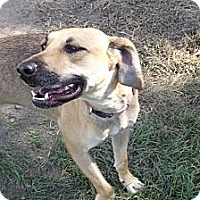 Adopt A Pet :: Serena - Lake Odessa, MI