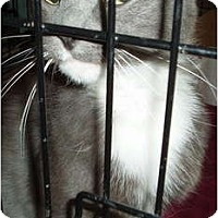 Adopt A Pet :: Tula - Westfield, MA