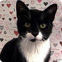 Adopt A Pet :: Jackson - Albany, NY