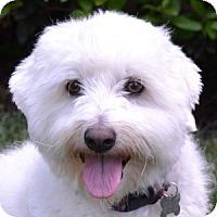Adopt A Pet :: Beckham - La Costa, CA