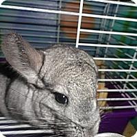 Adopt A Pet :: Dany - Titusville, FL