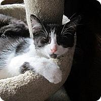 Adopt A Pet :: Pumba - Richland, MI
