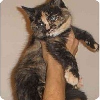 Adopt A Pet :: Victoria - Montreal, QC