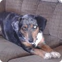 Adopt A Pet :: GYPSY-JJ - Roundup, MT