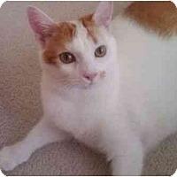 Adopt A Pet :: Mello - Reston, VA