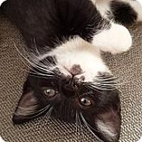 Adopt A Pet :: Jasper - Xenia, OH